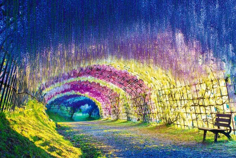 কোয়াচি ফুজি গার্ডেন বিশ্বের বিখ্যাত ৫টি ফুলের বাগান