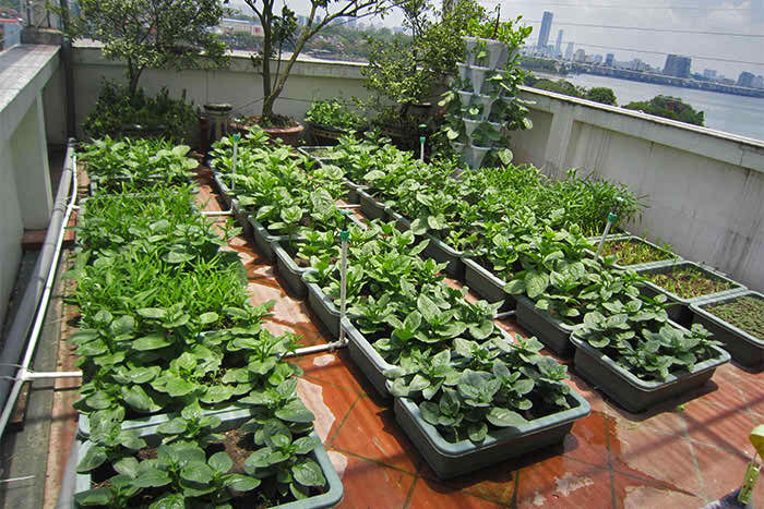 rooftop-vegitable-garden